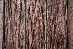 Wood texture. background old panels. Wood wall royalty free stock images