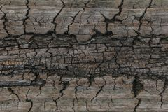 Wood texture. background old panels.old wooden textures for web background stock images