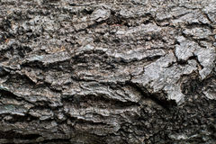 Wood texture. background Royalty Free Stock Image