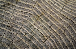 Wood texture background. Old wooden texture Stock Images