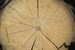 Wood texture background pattern. Beech Royalty Free Stock Photo