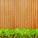 Wood texture background plank panel timber and green plant Calad Royalty Free Stock Photos