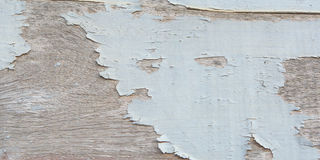 Wood texture. Background,rustic weathered barn wood background with knots Stock Images