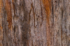Wood texture. Wood background texture. Tree texture Royalty Free Stock Photos