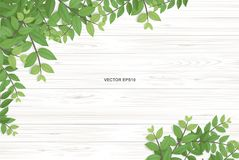 Free Wood Texture Background With Green Leaves. Vector Illustration. Royalty Free Stock Photos - 123362068