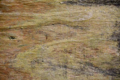 Wood texture bark tree trunk Stock Images