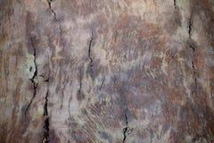 Wood texture bark tree trunk Stock Photos