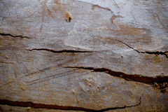 Wood texture bark tree trunk Royalty Free Stock Images