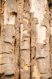 Wood texture bark tree trunk Royalty Free Stock Photos