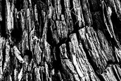 Wood texture black&white Stock Image