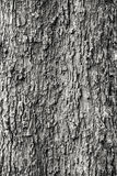 Wood Texture. Black and White Wood Texture (Tree Texture Royalty Free Stock Photography