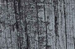 Wood texture blue color background Stock Photography