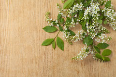 Wood texture with branch of bird cherry. Stock Image