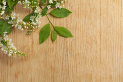 Wood texture with branch of bird cherry. Royalty Free Stock Image