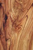Wood Texture: Camphor Laurel Stock Photos