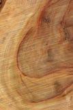 Wood Texture: Camphor Laurel. A Macro Wood grain texture shot Royalty Free Stock Photo