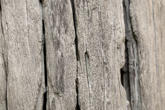 Wood texture. (center of frame is selected focus Royalty Free Stock Photography