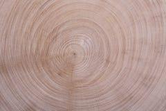 Wood texture circles Stock Photos