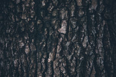 Wood Texture. Close Up Wood Texture Abstract Background Royalty Free Stock Images