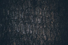 Wood Texture. Close Up Wood Texture Abstract Background Stock Photos
