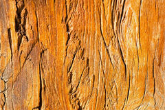 Wood Texture Close Up. Abstract Background. Wood Texture Close Up. Abstract Orange Background Stock Photography