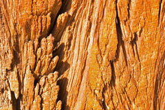 Wood Texture Close Up. Abstract Background. Wood Texture Close Up. Abstract Orange Background Royalty Free Stock Photos