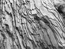 Wood Texture. Close up of giant redwood royalty free stock image