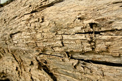 Wood texture 01. Closed up old lumber texture Royalty Free Stock Images