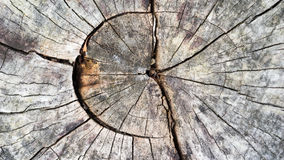Wood Texture Closeup Royalty Free Stock Image