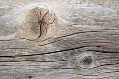 Wood texture. Closeup macro old Stock Photography