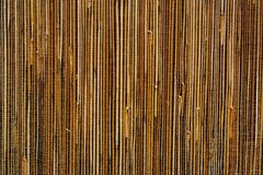 Wood texture coating Royalty Free Stock Photo