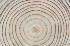 Wood texture. Cross saw cut pine with annual rings close-up. Stock Images