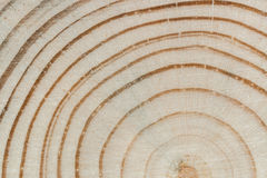 Wood texture. Cross saw cut pine with annual rings and core clos Stock Photos
