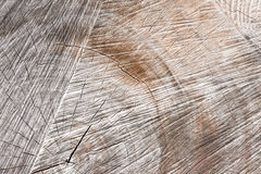 Wood texture, Cross section old dry tree stump Stock Photos