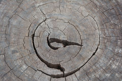 Wood texture. Cross section of the tree. Close-up wooden cut background. Wood texture. growth-ring Stock Photo
