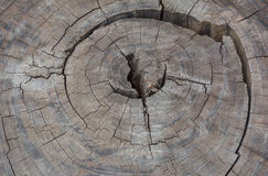 Wood texture. Cross section of the tree. Close-up wooden cut background. Wood texture. growth-ring Royalty Free Stock Photos