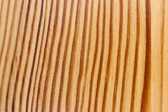 Wood Texture, Curved Regular Lines Stock Images