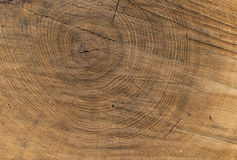 Wood texture of cut tree. Wood background natural texture of tree Royalty Free Stock Photos