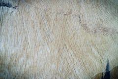 Wood texture cut tree trunk Stock Photos