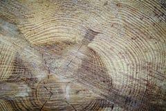 Wood texture cut tree trunk Royalty Free Stock Photos