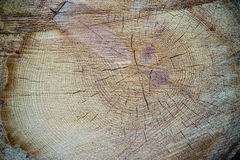 Wood texture cut tree trunk Stock Photos