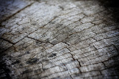 Wood texture of cut tree trunk, close-up. Stock Image