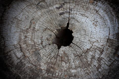 Wood texture of cut tree trunk, close-up. Royalty Free Stock Image