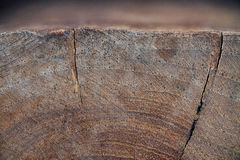Wood texture of cut tree trunk, close-up Royalty Free Stock Images