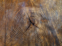 Wood texture of cut tree trunk, close-up center Royalty Free Stock Photography