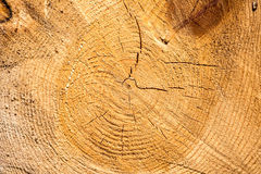 Wood texture. Cuted tree background. (Poland Stock Images