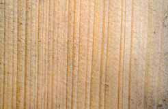 Wood Texture Of Cutted Tree Stock Photos