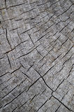 Wood Texture Of Cutted Tree Stock Photography