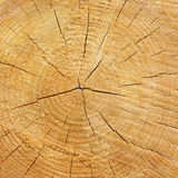 Wood texture of cutted tree trunk Royalty Free Stock Photos