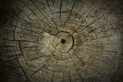Wood texture of cutted tree trunk, close-up Royalty Free Stock Image